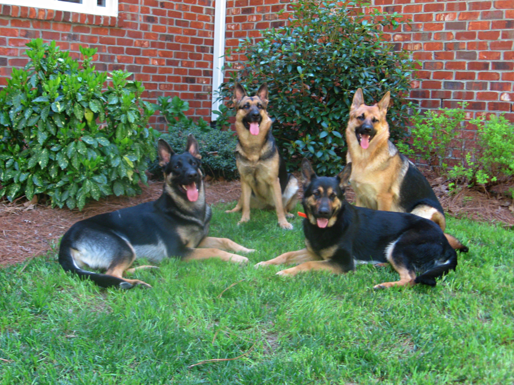 4dogs-enhanced1.png