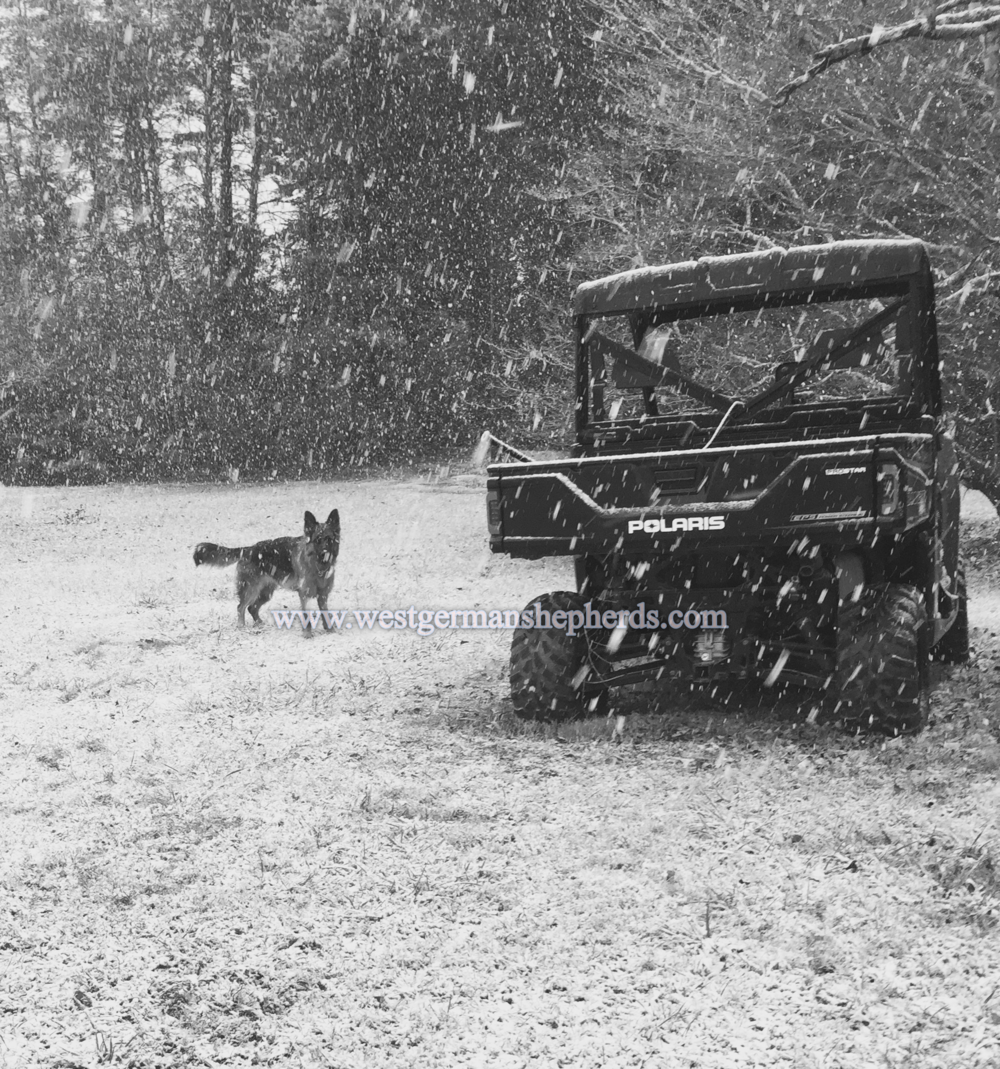 ava helps secure the homestead during a Western NC snowstorm