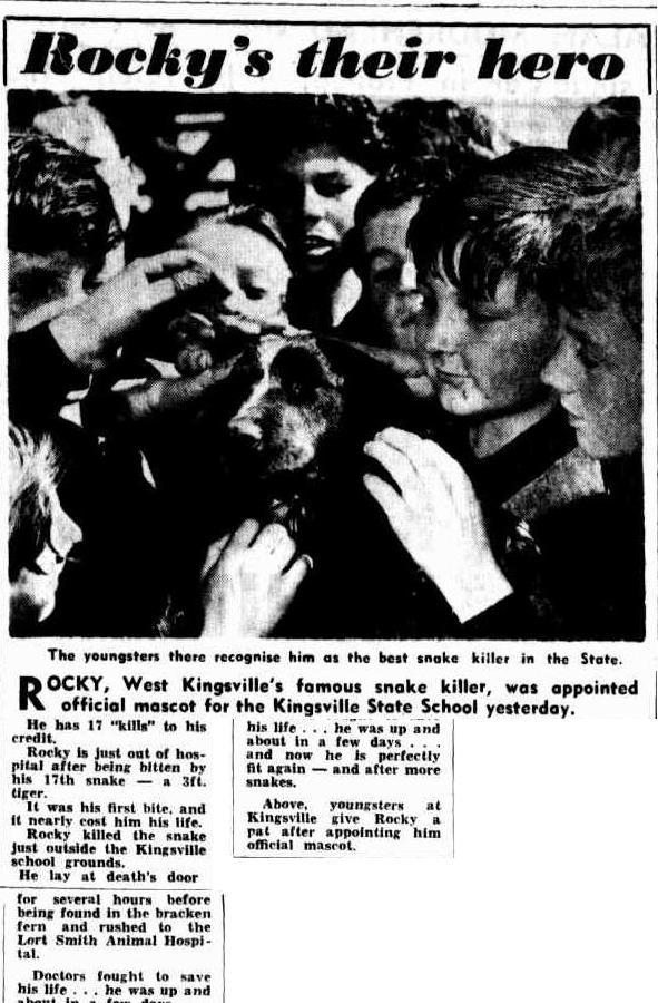 The argus, 25/11/1954