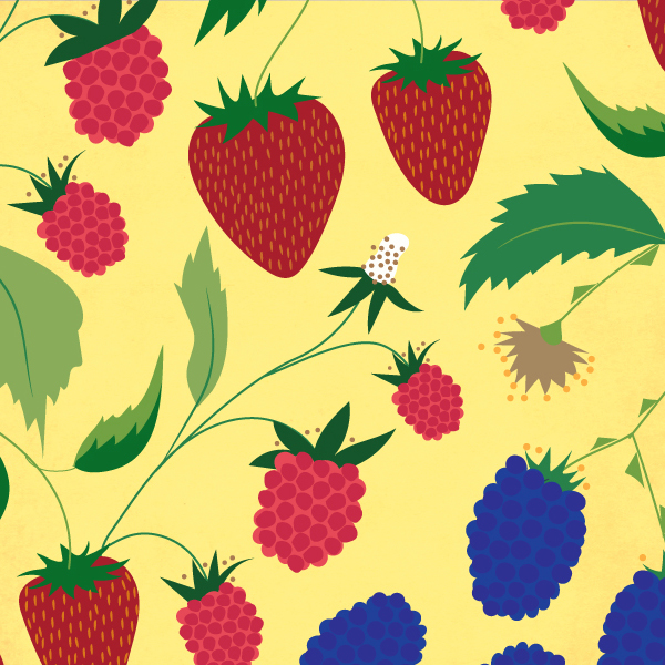 Illustration   for Bi-Rite Market's Berry Best Friends Promo