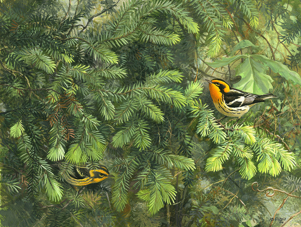illustration of birds in brush by Michael DiGiorgio