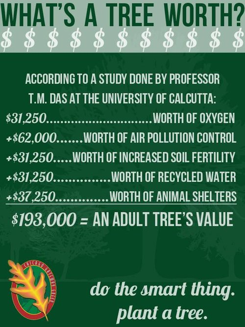 FOR JUST $5.00 YOU CAN HELP PLANT 3 WESTERN RED ALDER TO BE HARVESTED FIR USABLE HOME HEATING FIRE WOOD IN APPROX. 15 SHORT YEARS. EACH TREE YEILDING OVER 1/2 CORD OF WOOD WITH A 2018 VALUE OF $300.00 PER CORD. WITH ALL WOOD TO BE DONATED TO LOCAL CHARITIES HELPING FAMILIES HEAT THEIR HOMES IN WINTER. WHAT AN INVESTMENT OF TIME AND RESOURCE.