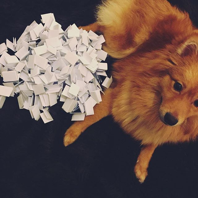 Fox is guarding the entries for tonight's Giveaway announcement ❤️ check back at 9pm (gmt) for the draw!! Good luck everyone 🎉 . . #jewellery#jewelry #instajewellery #instaart #instadaily #smallbusiness #moonchild #wildchild #love #beautiful #igers #instamood #instagood #wildbydescent #fashion #fashionblogger #girlboss #handmade #art #handmadejewellery #etsy #style #instastyle #etsyseller #smallbusiness #giveaway #competition #giveaways #win