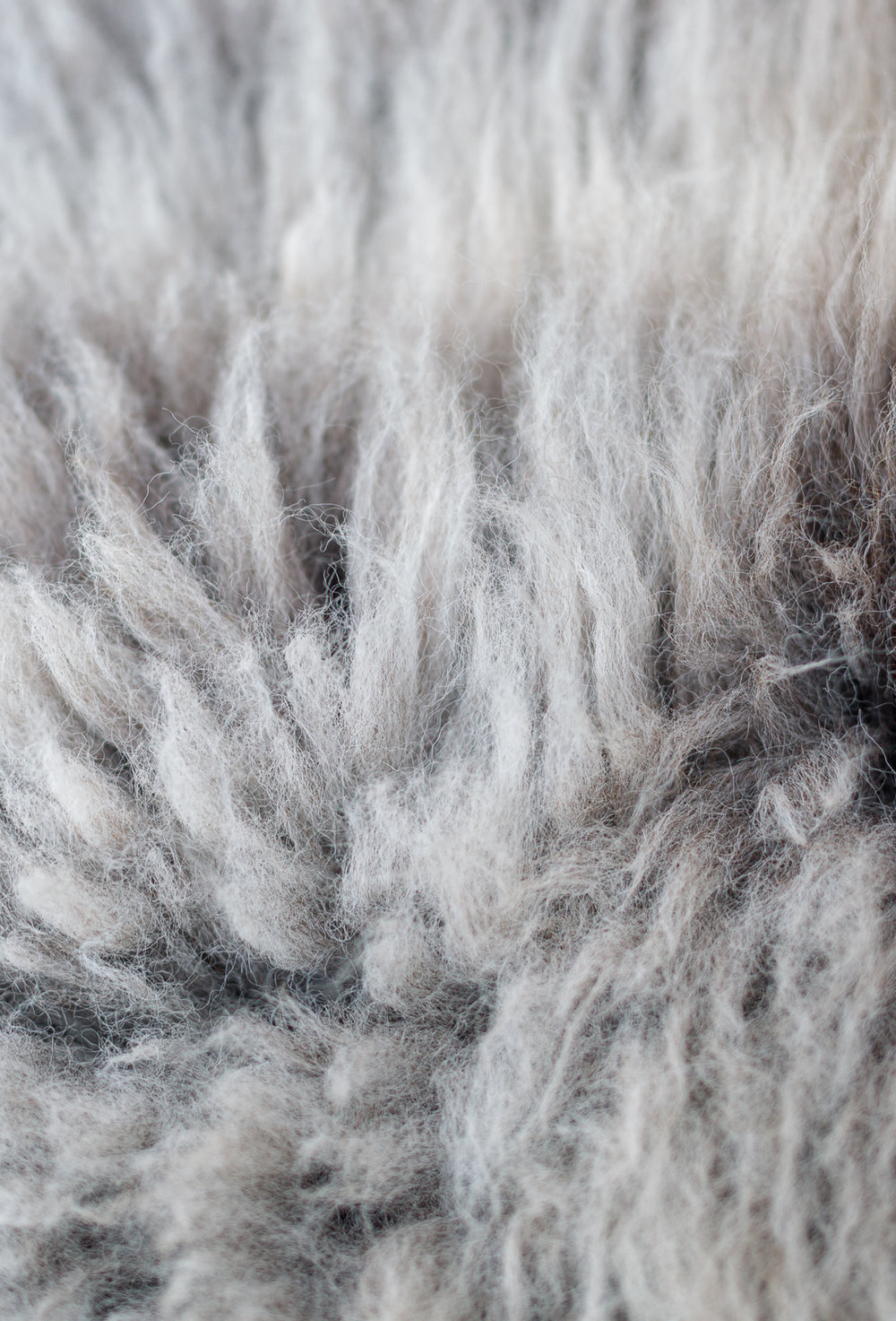 Herdwick sheep . Look after your rug and love it for years.