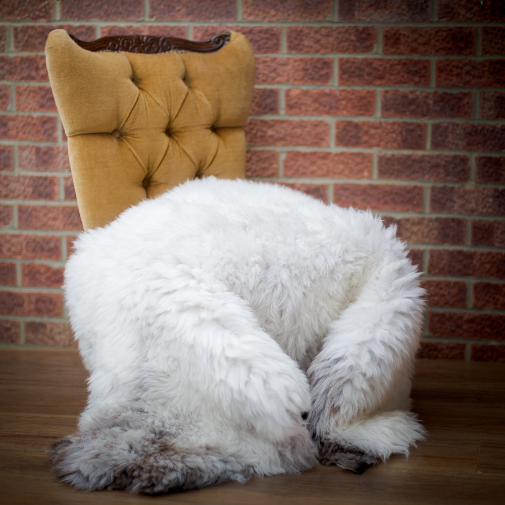 Giant white sheepskin rug with natural grey patch