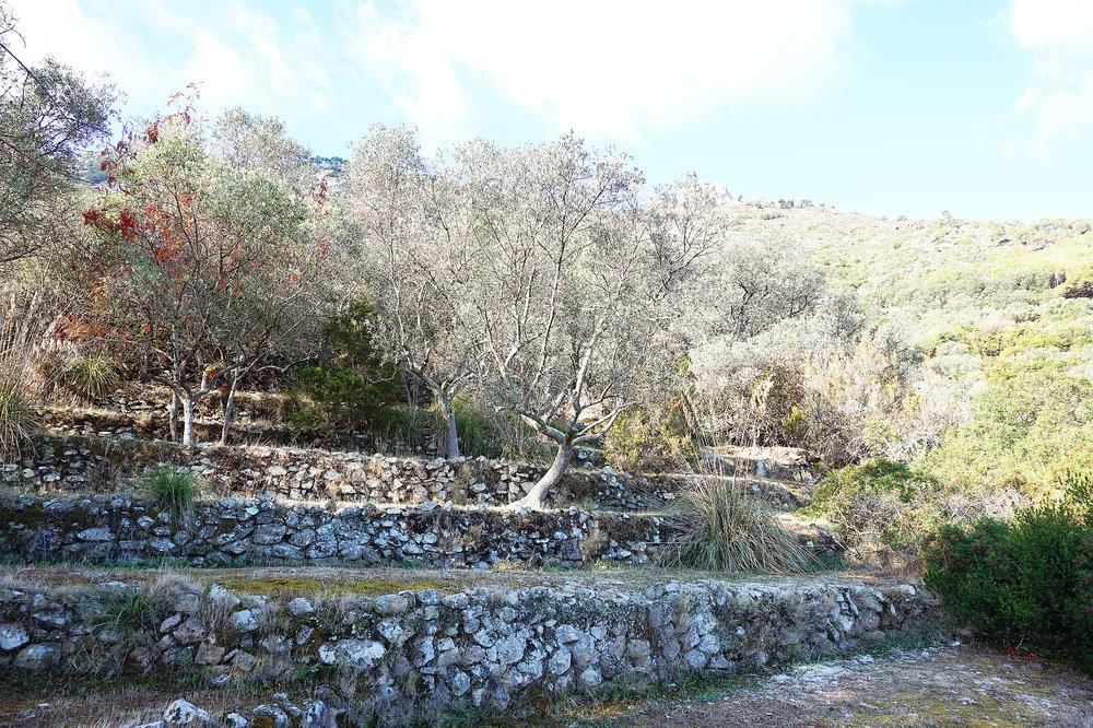 terraces 6.jpg