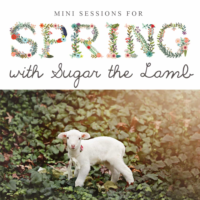 spring minis, spring photography, acworth, canton, woodstock, georgia