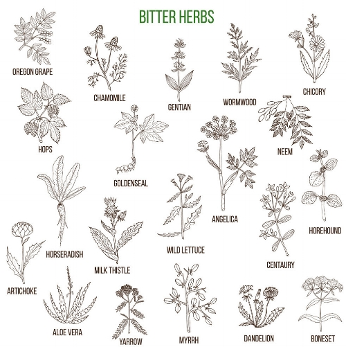 bitter-herbs-collection-vector-13716265.jpg