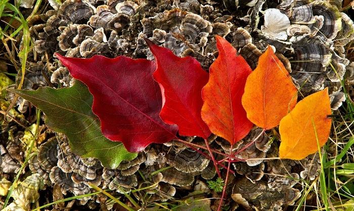 fall_colors19.jpg