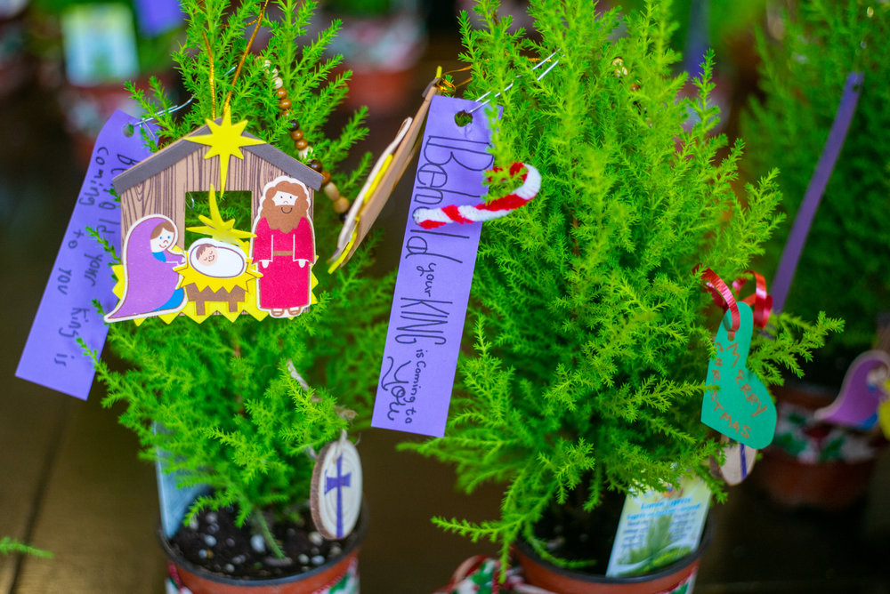 jesse-tree--15_45445044665_o.jpg