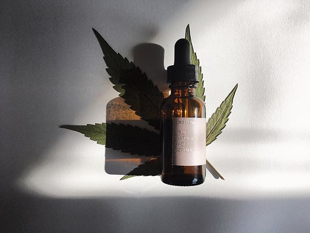Hemp seed oil is known as nature's most perfectly balanced oil because it contains all 21 amino acids and a 3:1 ratio of Omega 6 to Omega 3 essential fatty acids (the ideal balance for healthy skin). This oil is a powerful, natural treatment for acne and eczema since it hydrates without clogging pores, smoothes bumps and rough spots, and has clinically proven anti-inflammatory properties.  Like the other carrier oils in the True Nature Face Serum, our hemp seed oil is cold-pressed, unrefined, and organic for high quality and potency.