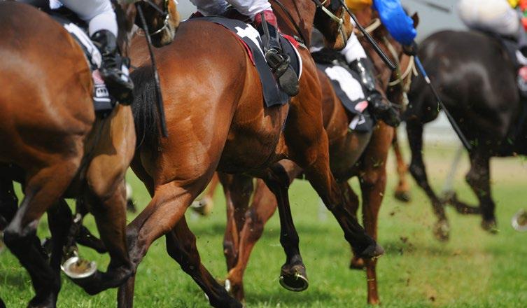 eggPlant-Case-study-William-Hill-horses.jpg