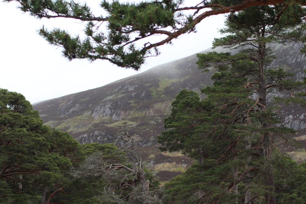 Stunning highland scenery!