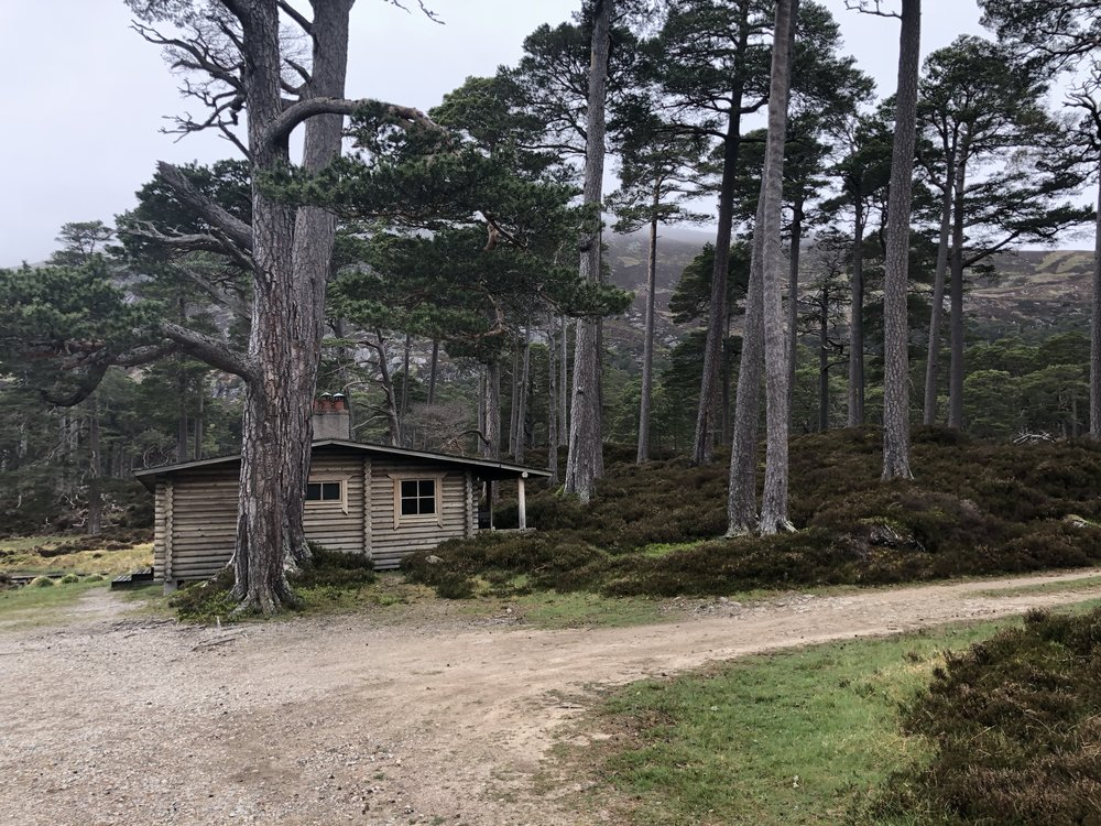 We were taken out to the Honaka Cabin, a gift to the Queen from Finland. The Royal Family uses the cabin often for cookouts.