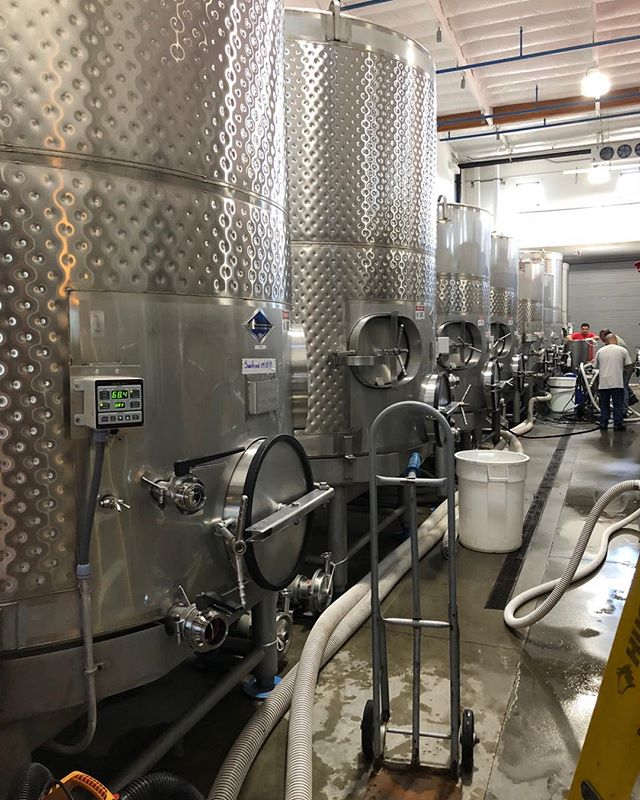 Busy day in the winery during harvest - video to follow tomorrow