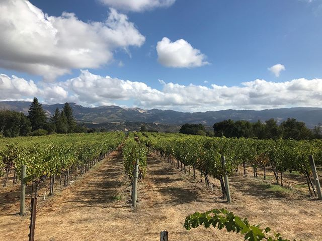 Picking day at Laurel Glen Vineyards, small lots of Cabernet Sauvignon with Betttina and friends. If you are looking for great wines check out their tasting room in Glen Ellen, Sonoma Valley. Bettina and Eric will treat you right. Eric knows the best French bakery in the valley! http://ow.ly/afiK30m6Iaz