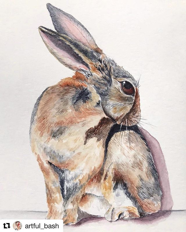 "#Repost @artful_bash (@get_repost) ・・・ Sennelier Aquarelle on 140lb Fabriano HP paper, 5 x 7"" In the home stretch— 6 more arts to finish my @brooklynartlibrary Sketchbook! . . . #watercolor #watercolorartist #artistsoninstagram #rabbitsofinstagram #rabbit #animals #blickartmaterials #namurabrush #fabriano #society6 #brooklynartlibrary #sketchbook #sketchbookproject #sbpprocess #neolucida"