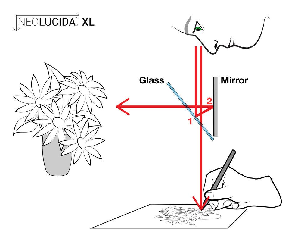 NLXL Diagram 2400px.jpg