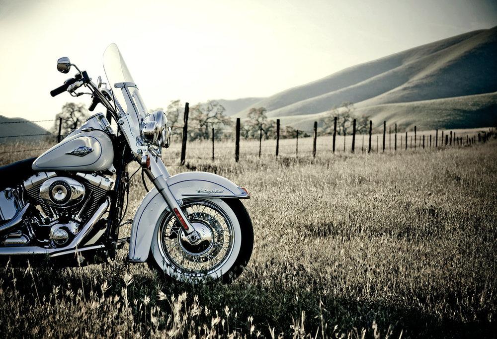 Harley-in-Feild-LIVE.jpg