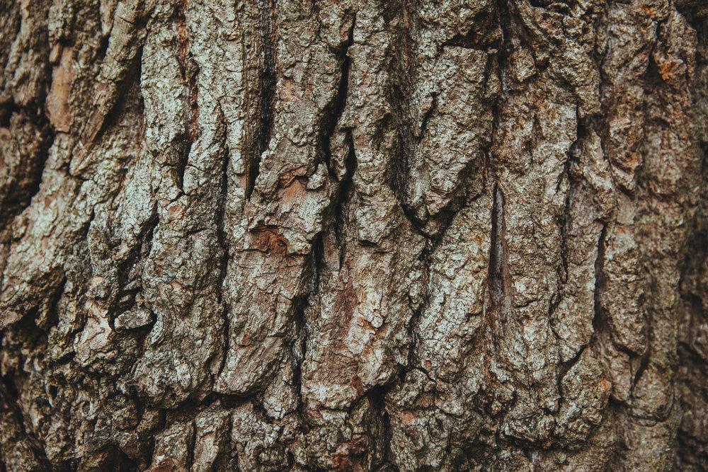 header_thewhippingtree.jpg