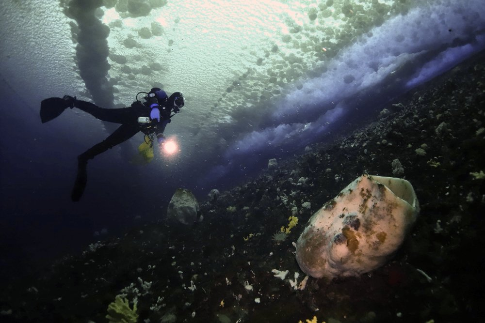A diver inspecting a large barrel sponge while diving in McMurdo Sound's supercooled seawater.  In the glare of the diver's flashlight you can see small ice crystals floating in the water column. These crystals sometimes appear when the seawater is slightly  below  its freezing point–a phenomenon unique to Antarctica's coastal areas. Seawater supercooling may increase the risk of freezing to the fishes and invertebrates.