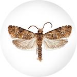 Otrov za moljce