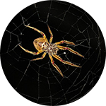 Sredstvo protiv paukova