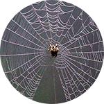 Zaštita od paukova