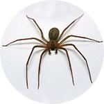 Dezinsekcija pauka
