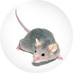 Sredstvo protiv miševa