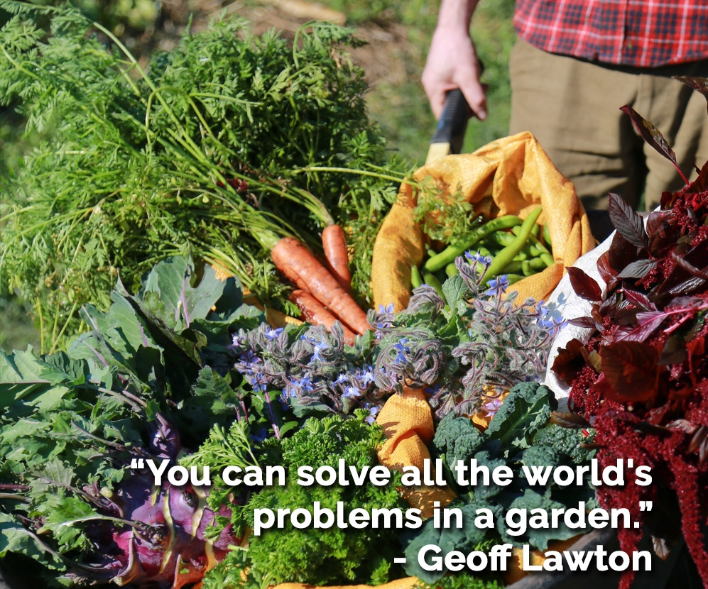 All the world problems, veg.jpg