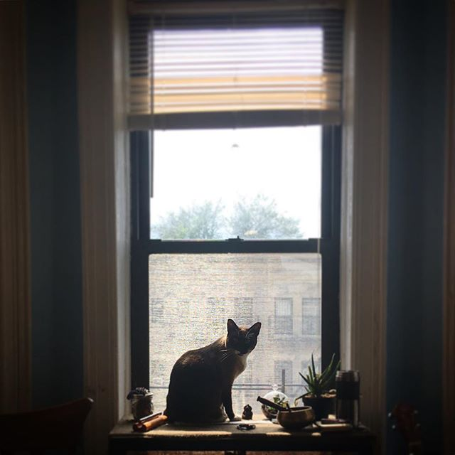 Home.  #homeiswheretheartis #catsofinstagram #catsofbrooklyn #waitingforthelandlord