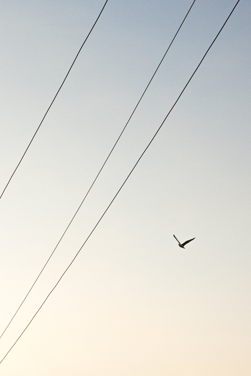 DSC_0590_BIRD.jpg
