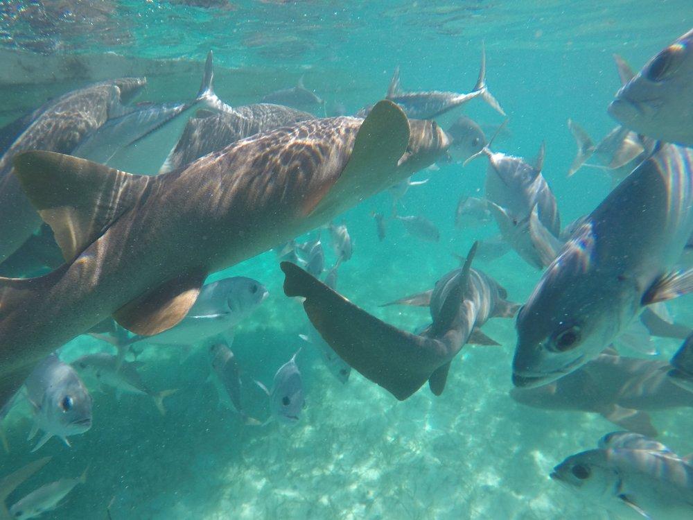 25.Sharks Swimming Away (Water) - Cropped.jpg