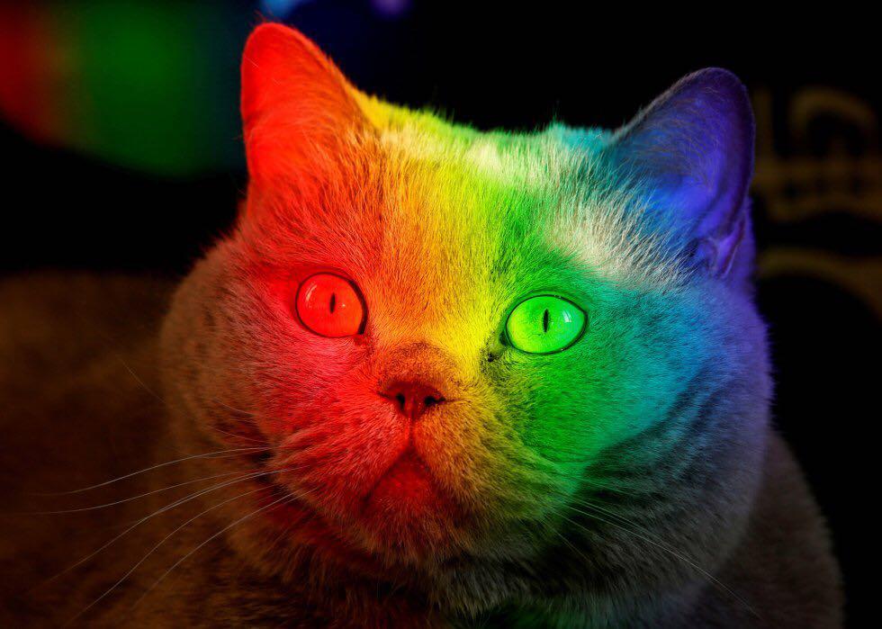 el gato de colores.jpg