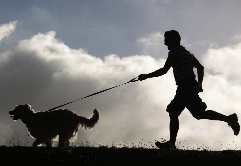 perro garcia 3.jpg