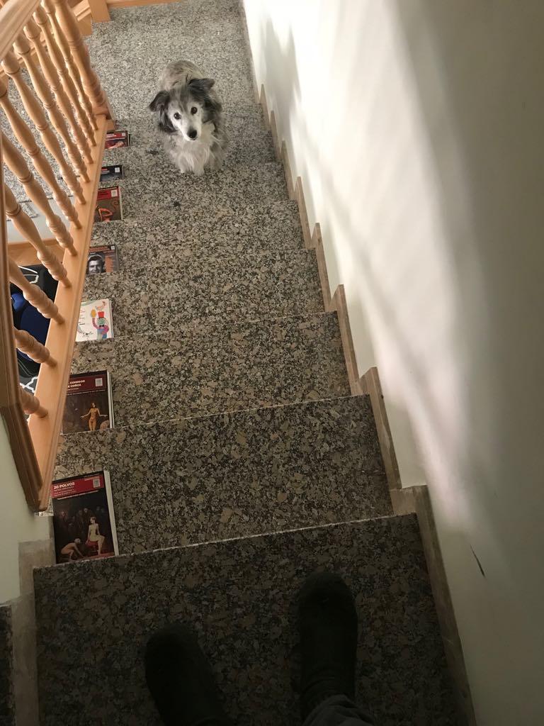 Mi perra Anaïs Nin, deseando que vuelva el escritor loco que conoció y que cuidaba de ella.