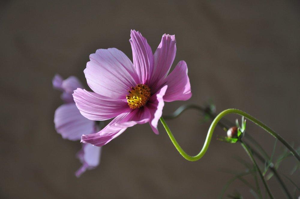 flower-plant-flowering-krasenka-38997.jpeg