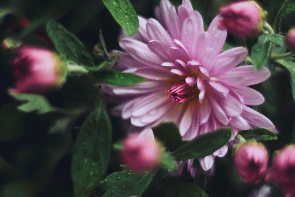 flowers-house-plant-flower.jpg