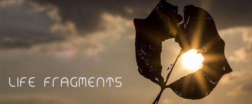 Life Fragments Banner.jpg