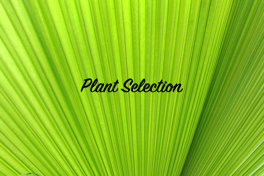 plant_selection.jpg