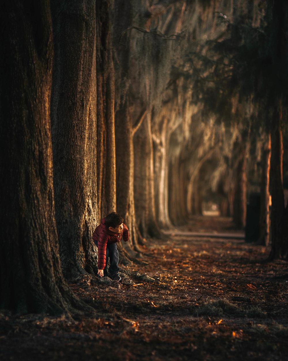 lighttreesFINAL.jpg