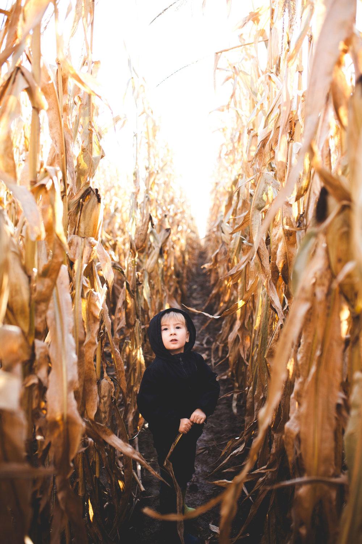 preschooler-boy-cornfield-adventure-hamilton-lifestyle-photographer.jpg