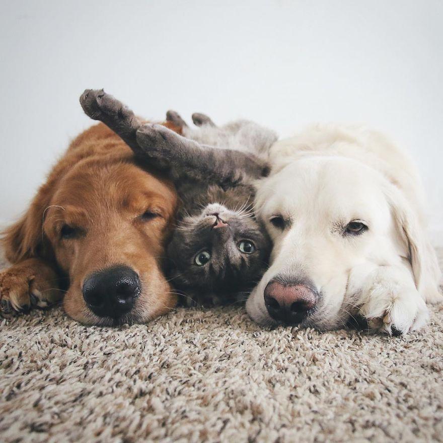 Dog Blog 2.jpg