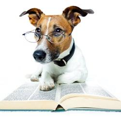 Importance Dog Blog 1.jpg