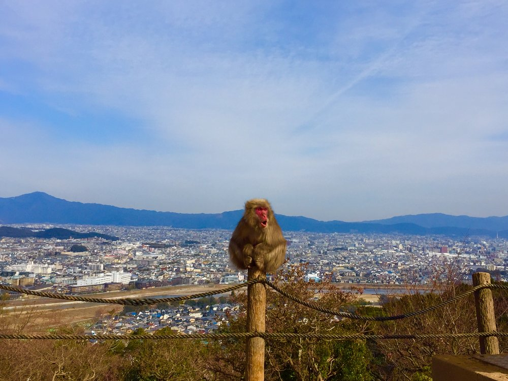 Macaque in Kyoto