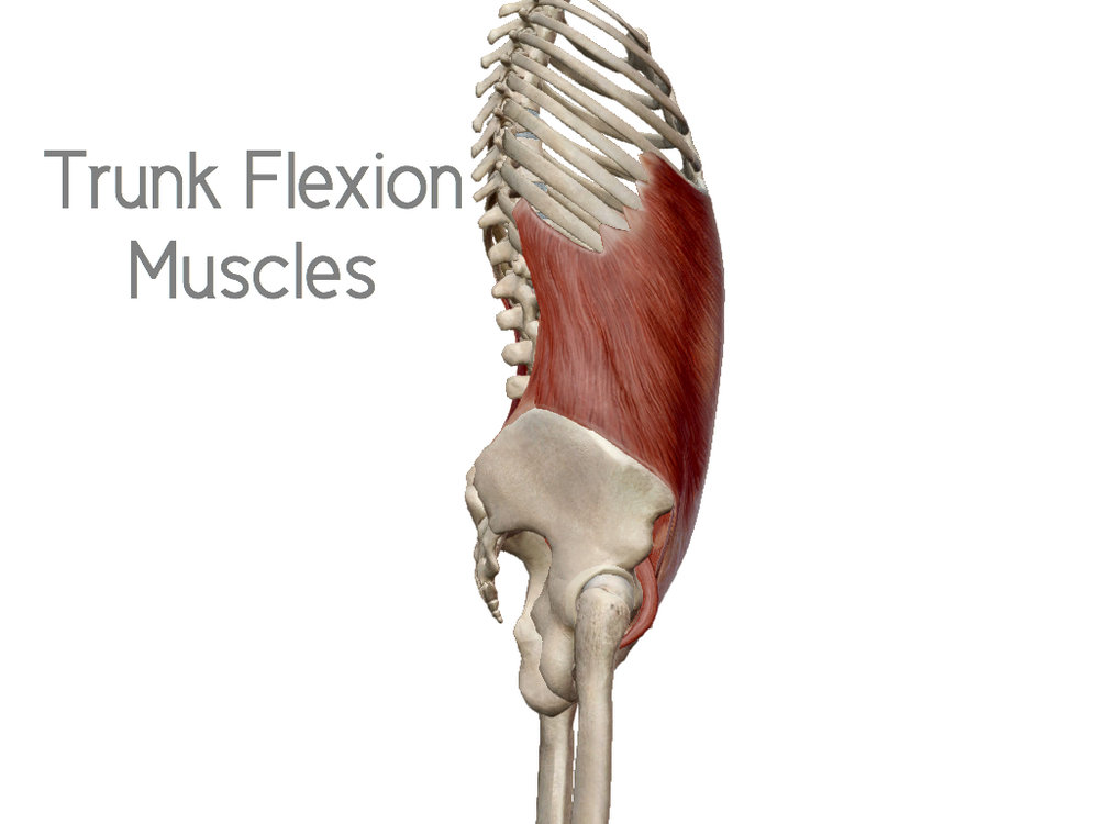 Trunk Extension Muscles + Trunk Flexion Muscles = Total Cylindrical Core