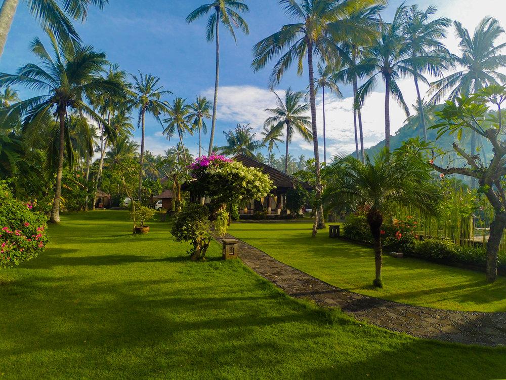Bali Lawns
