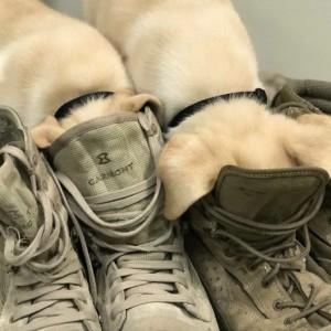 Shoe Litter
