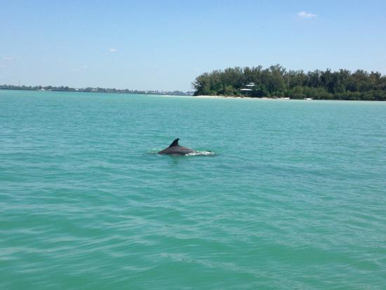 paradise-boat-tours.jpg